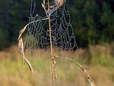 Free Cobweb. Royalty Free Stock Photos - 584158