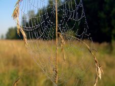 Free Cobweb. Royalty Free Stock Images - 584159