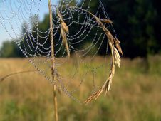 Free Cobweb. Stock Photo - 584160