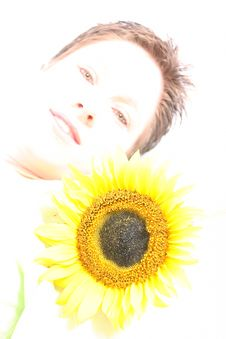 Free Face Od A Sunflower Royalty Free Stock Image - 584286