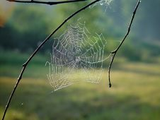 Free Cobweb. Royalty Free Stock Photo - 584415