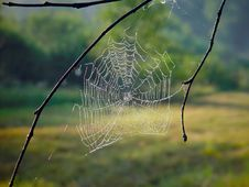 Free Cobweb. Royalty Free Stock Photos - 584418