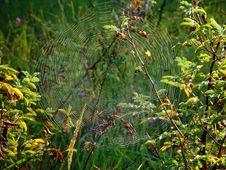 Free Cobweb. Royalty Free Stock Images - 584419