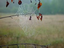 Free Cobweb. Stock Photos - 584423