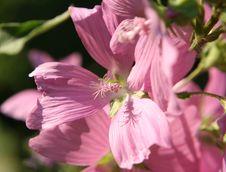 Free Macro Of Stamen In Wild Flower Stock Photo - 585130