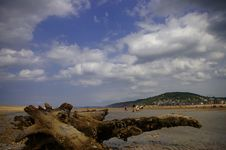 Free Tree Covered In Barnacles Stock Photos - 586253