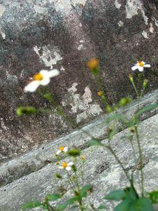 Free Wild Flowers Stock Photography - 586402