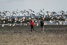 Free Boys And Seagulls Royalty Free Stock Images - 586539