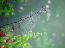 Free Cobweb. Royalty Free Stock Images - 587009