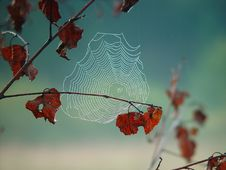 Free Cobweb. Royalty Free Stock Images - 587029