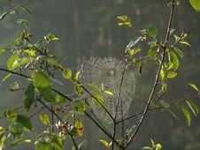 Free Cobweb. Stock Photography - 587622