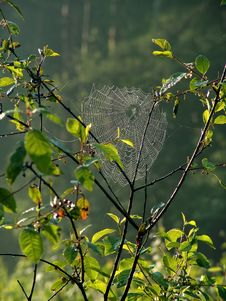 Free Cobweb. Stock Photos - 587623