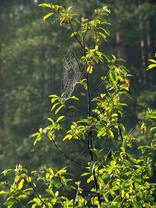 Free Cobweb. Stock Images - 587624