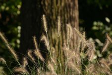 Free Grass2 Royalty Free Stock Photography - 588877