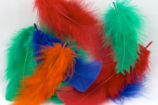 Free Dyed Feathers Royalty Free Stock Images - 589259