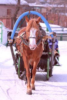 Horse Royalty Free Stock Image