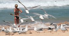 Group Of Seagulls On A Beach Stock Photography