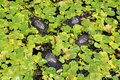 Free Turtles Stock Images - 5806424