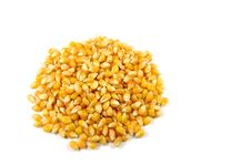 Group Of Popcorn Seeds Royalty Free Stock Photo