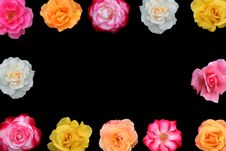 Free Collage Of Beautiful Rose Blossoms Royalty Free Stock Image - 5801546