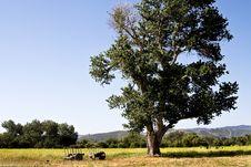 Free Single Tree Stock Photography - 5802462
