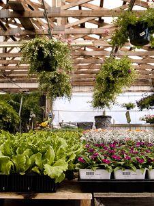 Free Indoor Green Garden Stock Photo - 5802670
