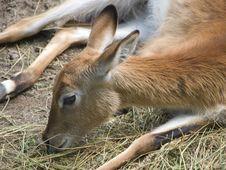 Free Antelope Stock Image - 5803241