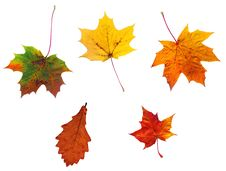 Free Full-size Composite Photo Of Various Autumn Leaves Royalty Free Stock Images - 5803729