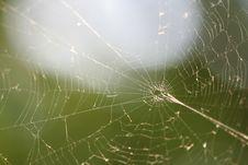 Free Spider Web Stock Photos - 5804973
