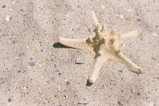 Free Starfish Stock Photos - 5805193