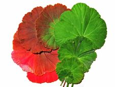 Colourful Leaves Royalty Free Stock Photography