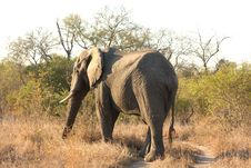 Free Elephant In Sabi Sands Stock Photography - 5805972
