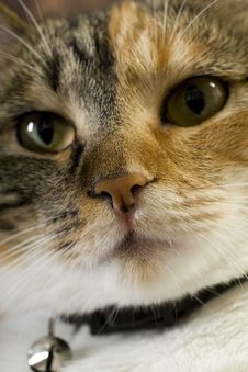 Free Cat Closeup Royalty Free Stock Image - 5806366