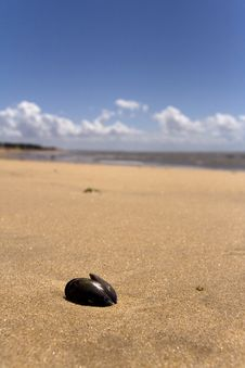 Free Mussel On A Beach Royalty Free Stock Photo - 5807515