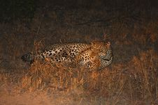Free Leopard In The Sabi Sands Stock Photos - 5807613