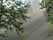 Sun Rays In Misty Forest 2 Royalty Free Stock Photography