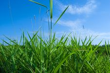 Free Lively Natural Landscape: Grass And Sky Stock Images - 5807914