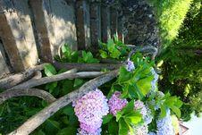 Free Flowersin Park Stock Photo - 5808030