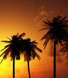 Free Beautiful Sunset Royalty Free Stock Photos - 5808158