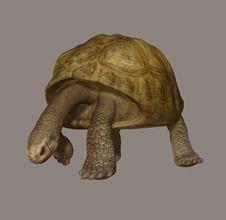 Free Turtle Stock Photo - 5808420