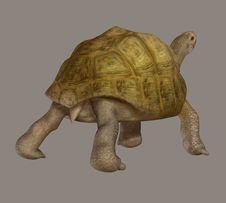 Free Turtle Royalty Free Stock Image - 5808426