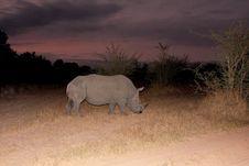 Free Black Rhino Royalty Free Stock Images - 5808869