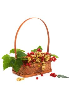 Free Basket With A Currant Stock Images - 5809544
