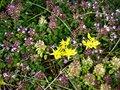 Free Mountain Flora  In The Austrian Alps Stock Photos - 58023513