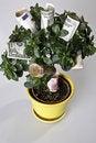 Free Money Tree Royalty Free Stock Image - 5817066