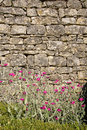 Free Pink Flowers Against Brick Wall Stock Photography - 5817192