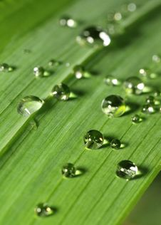Free Reflective Water Droplets On A Leaf Stock Images - 5810784