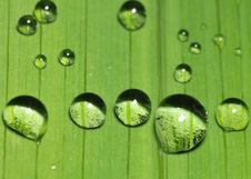 Free Water Droplets On A Leaf Stock Photos - 5810803