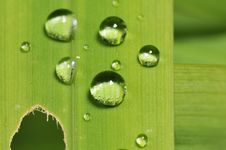 Free Water Droplets On A Leaf Stock Photography - 5810832