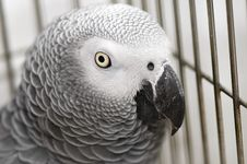 Free Cute Grey Parrot Stock Image - 5810951